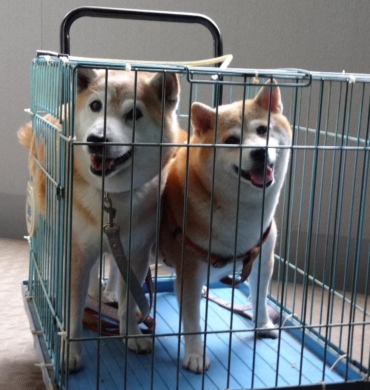 ペット可マンションでも犬と暮らす世帯はマイノリティー