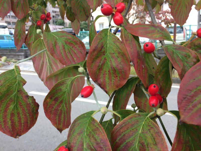 東京の片田舎でも秋が深まる