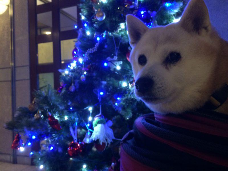 クリスマス近いね