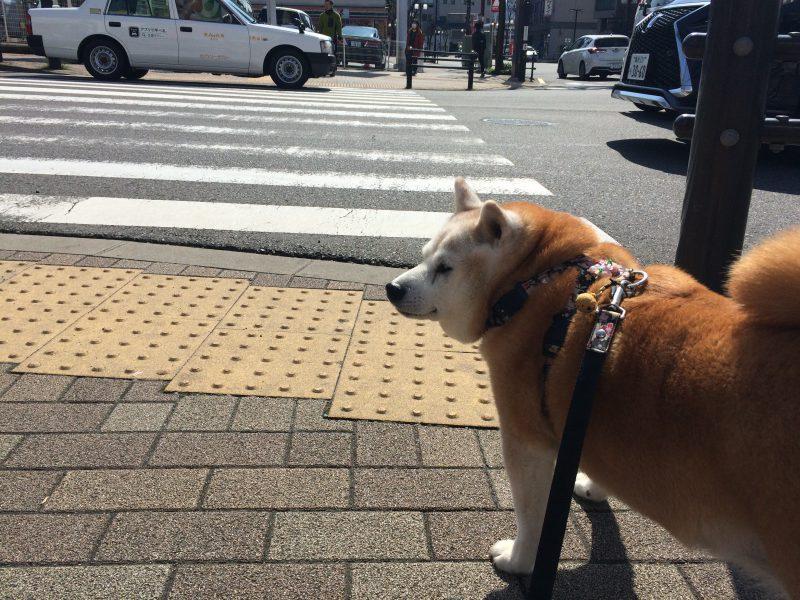 横断歩道で、ふと思った