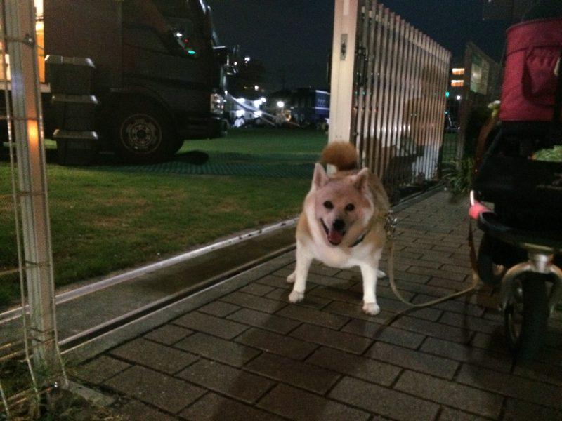 芝生広場で夜のイベント