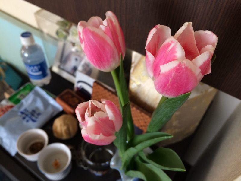 鼓太郎の月命日 今月のお花はチューリップ