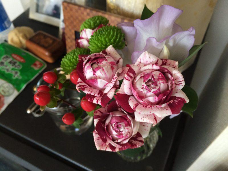 鼓太郎の月命日 今月のお花は、これは薔薇なのか?