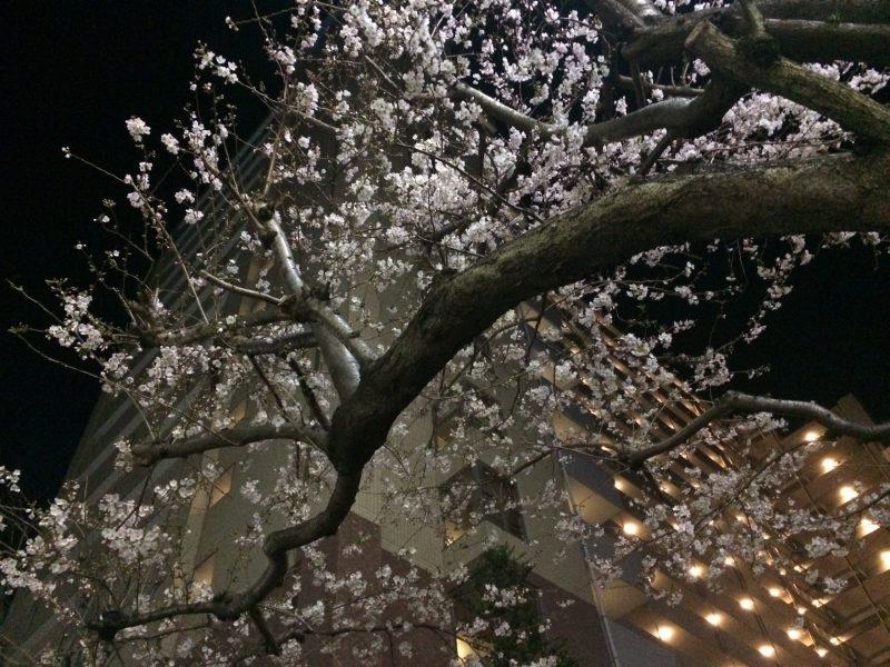 夜の方が春の匂いを感じる