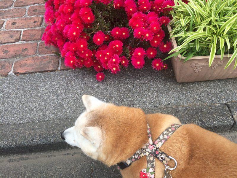 てかてかの花 パートⅡ