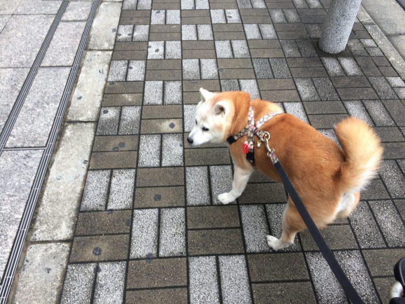 東京の片田舎は非常事態宣言継続中